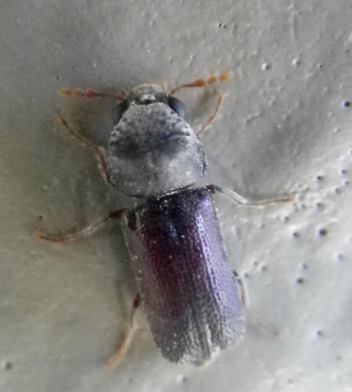 Beetle 8.23.16