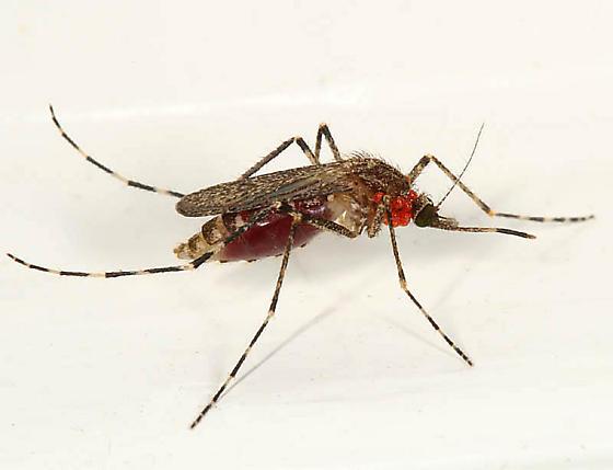 farmapest sivrisinek resimleri ile ilgili görsel sonucu