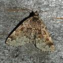 Greater Idia Moth -- Idia majoralis - Idia majoralis