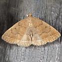Yellowish Zanclognatha - Zanclognatha marcidilinea