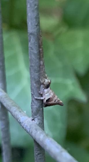Tmarus species? - Tmarus