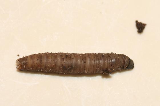 Wierd larva