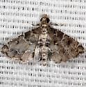 moth - Sufetula diminutalis