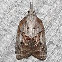 Platynota idaeusalis - female