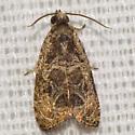 Unknown Olethreutes Moth - Olethreutes