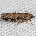 Pecan Bud, Moth - Gretchena bolliana