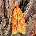 Sparganothis Fruitworm Moth  - Sparganothis sulfureana