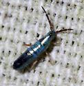 Lepidocyrtus paradoxus