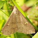 Speckled Renia Moth - Hodges#8386 - Renia adspergillus