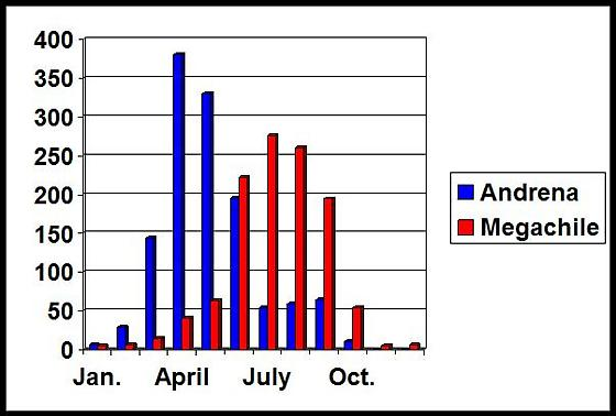 Phenology of Andrena and Megachile