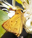 H. phyleus? - Hylephila phyleus
