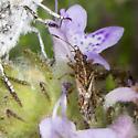 True Bug ID request - Xyonysius