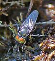 Some type of Dolichopodidae?