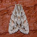 Andropolia - theodori or epichysis? - Andropolia theodori