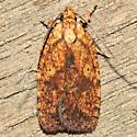 Agonopterix robiniella