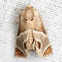 Shagreened Slug Moth - Hodges #4669 - Apoda biguttata