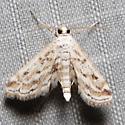 Parapoynx allionealis