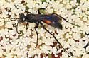 Spider Wasp - Anoplius? - Anoplius