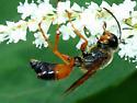 Wasp with passenger? - Sphex ichneumoneus