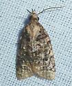 unknown AR moth #12 - Platynota exasperatana