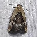 Chalcedony Midget - Hodges#9679 (Elaphria chalcedonia)  - Elaphria chalcedonia
