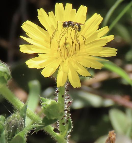 Little Critters on stem below a Certain on Flower