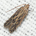 Moth 09.09.06 (1) - Spinitibia hodgesi