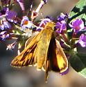 Skipper for ID (Long Dash?) - Hylephila phyleus