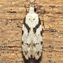 Pseudotelphusa palliderosacella