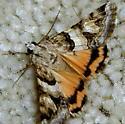 Drasteria tejonica - Drasteria howlandii