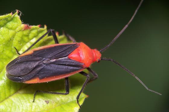 Plant Bug?