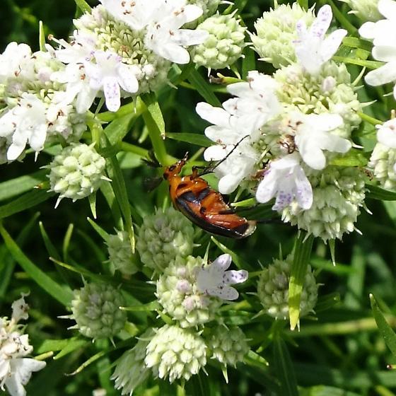 In Decorah Community Prairie and Butterfly Garden