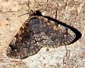 Brown and tan moth - Idia majoralis