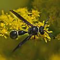 Wasp 755A 0945 - Eumenes fraternus