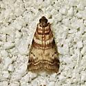 Sweetgum Leafroller Moth  (Sciota uvinella) - Sciota uvinella