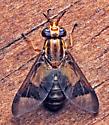 Chrysops?  - Chrysops flavidus - female