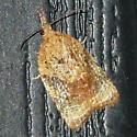 Unknown Moth - Platynota flavedana