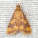 Phoenicean Pyrausta Moth - Hodges #5049 - Pyrausta phoenicealis