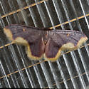 Stained Lophosis Moth - Hodges #7181 - Lophosis labeculata - male