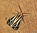 Which tiger is this? - Apantesis nais