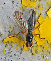 Fly - female