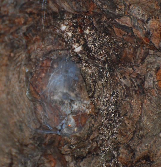 Web in Wood Gnarl