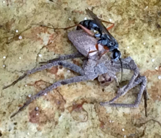 Mortal Combat - Wasp vs. Spider - female