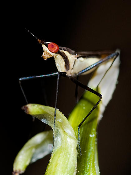 Iao Valley insect