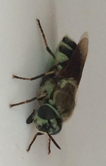 Lovely Fly