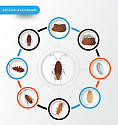 Life Cycle of a Cockroach