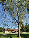 Green Striped Mapleworm- Iowa - Dryocampa rubicunda