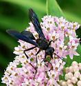 Wasp Isodontia? - Isodontia