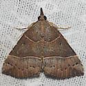 Deceptive Bomolocha - Hodges#8446 - Hypena deceptalis