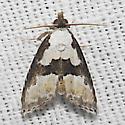 Thin-winged Owlet Moth - Hodges#8440 - Nigetia formosalis